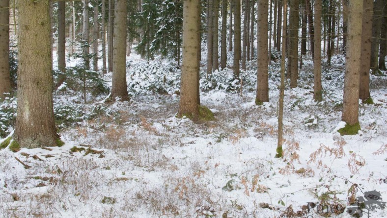 Field Review: non winter camouflage patterns in winter time