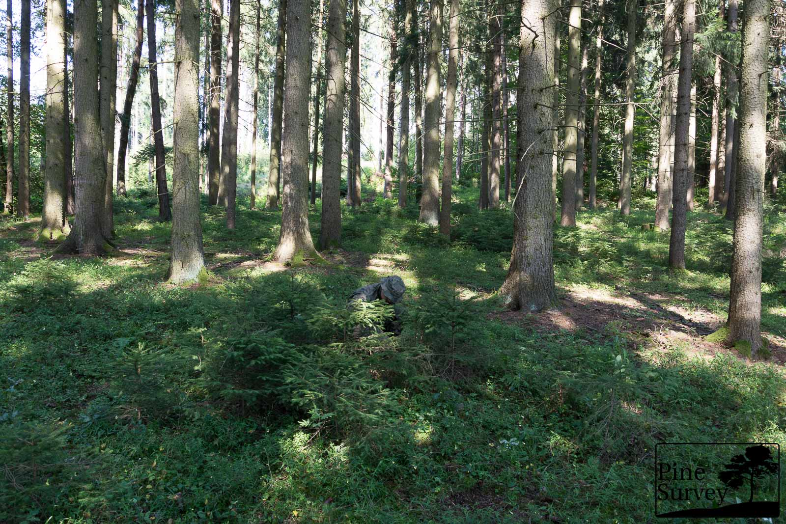 PL Woodland in the kneeling position - wide angle
