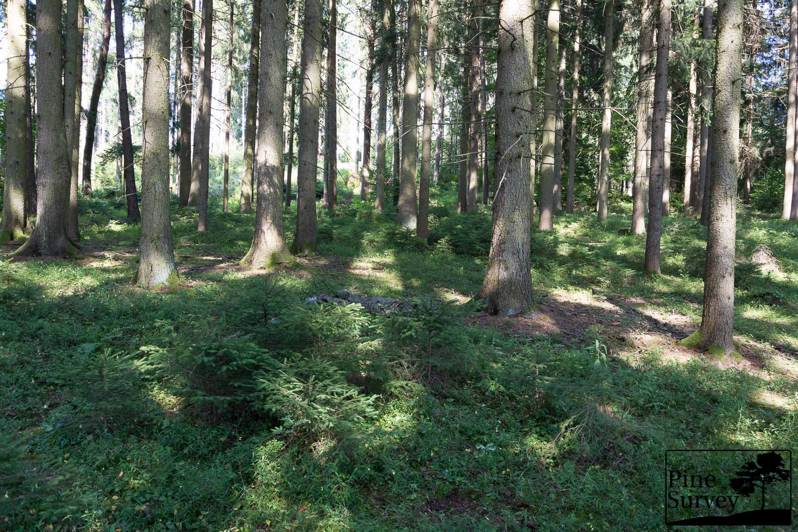 PL Woodland in the prone position - wide angle