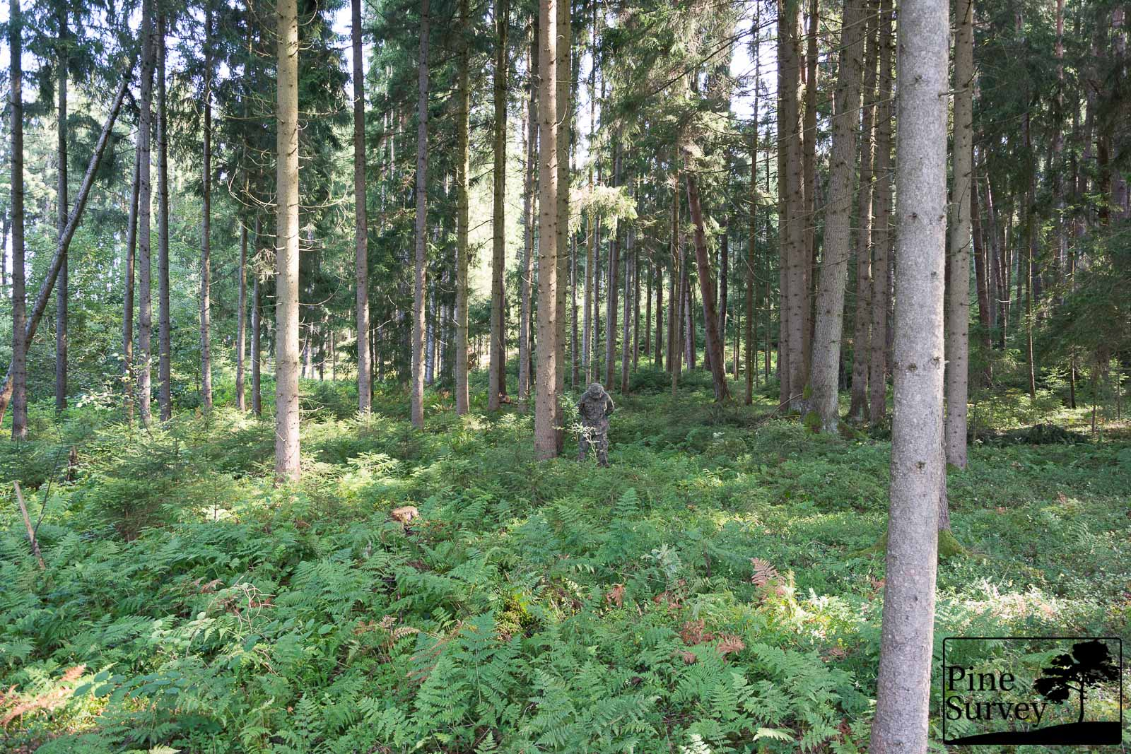 PL Woodland (wz93) - standing position, wide angle