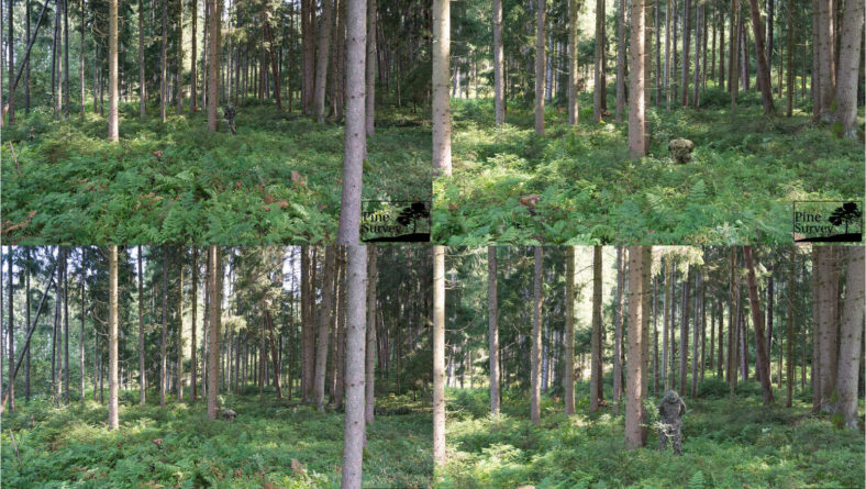 Fieldtest: Comparison of temperate/woodland camouflage patterns