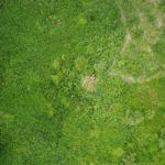 Eyes in the Sky – Fieldtest: PenCott Camouflage Greenzone